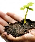 Θεραπευτική κηπουρική